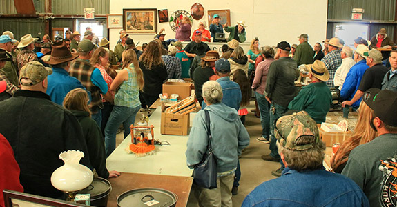 Live Auction New Mexico